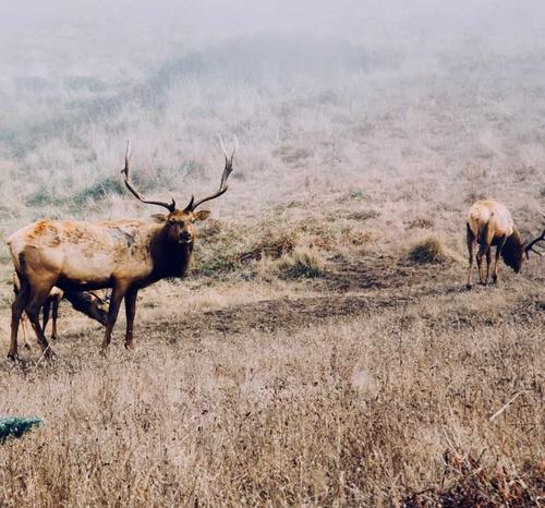 https%3A%2F%2Fwww.crowdfundinsider.com%2Fwp content%2Fuploads%2F2018%2F02%2Fkyle glenn unsplash Wyoming Elk Wildlife